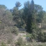 The Surroundings / Les Alentours